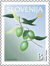 oljka, oliva - znamka Slovenije