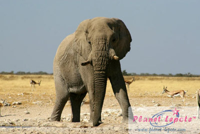 namibija21